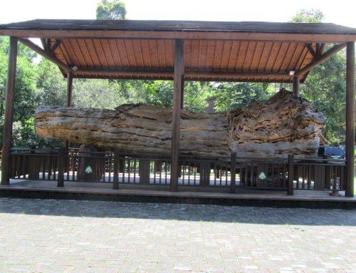 東勢林業文化園區
